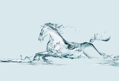 l'eau de cheval Photographie stock