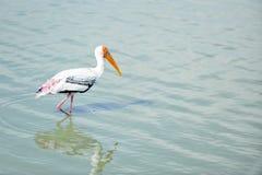 l'eau de flaminggo Photos libres de droits