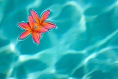 l'eau de fleur Photos stock