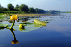 l'eau de fleur Photographie stock libre de droits