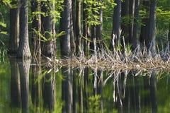 L'eau de forêt Image stock