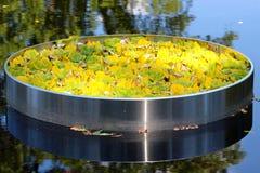 l'eau de jardin Photographie stock libre de droits