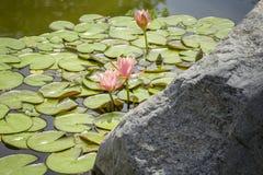 l'eau de jardin Photo libre de droits