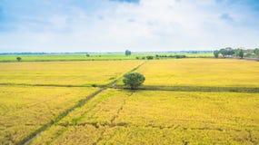 L'eau de l'utilisation de barrage pour le riz cultivé Photo stock