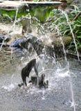 L'eau de la fontaine de poissons Image libre de droits