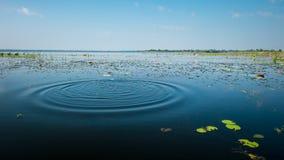 L'eau de lac et de terre Images libres de droits