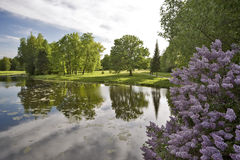 l'eau de lilas d'horizontal Image stock
