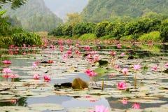 L'eau de Lilly fleurit au chua Huong de Yens de Suoi Image stock