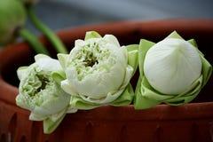 l'eau de lotus de lis photo stock