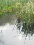 L'eau de miroir Image libre de droits