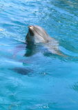 L'eau de nettoyage de dauphin Photo libre de droits