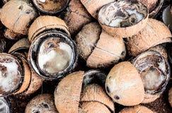 L'eau de noix de coco de fond de fourrure de Brown photographie stock libre de droits