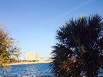 L'eau de palmier Photo libre de droits