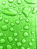 l'eau de pluie sur le fond vert photographie stock libre de droits