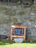 L'eau de ` pour le ` de chiens Image stock