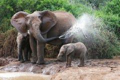 l'eau de pulvérisation d'éléphant images libres de droits