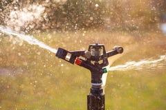 L'eau de pulvérisation d'arroseuse de pelouse au-dessus de l'herbe verte Photo libre de droits