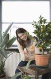 L'eau de pulvérisation de femme sur l'élevage orange sur l'usine Photo stock
