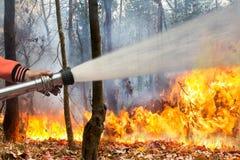 L'eau de pulvérisation de sapeurs-pompiers au feu de forêt photo stock