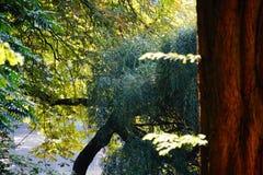 l'eau de réflexion d'automne de lac Photos stock