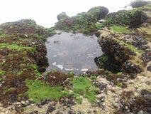 L'eau de roche de poissons de plage de nature Images libres de droits
