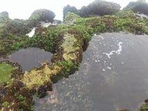 L'eau de roche de poissons de plage de nature Image libre de droits
