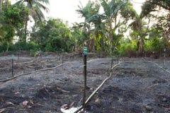 L'eau de sauteurs sont sur le jeune arbre du jardin de pastèques images stock
