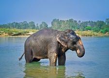 L'eau de soufflement mignonne d'éléphant asiatique hors de son tronc Images stock