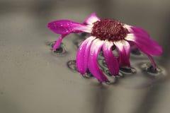 l'eau de table en verre de fleur Images stock