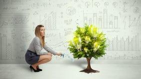 L'eau de versement de femme d'affaires sur l'arbre croissant d'ampoule Photos stock