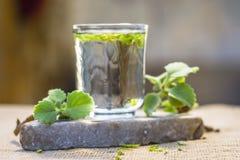 L'eau des feuilles d'ajwain et des graines, ammi de Trachyspermum dans un verre salutaire pour la perte de poids Photos stock