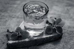 L'eau des feuilles d'ajwain et des graines, ammi de Trachyspermum dans un verre salutaire pour la perte de poids Image stock