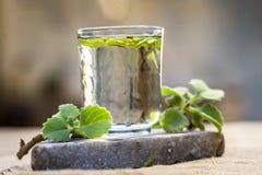 L'eau des feuilles d'ajwain et des graines, ammi de Trachyspermum dans un verre salutaire pour la perte de poids Images libres de droits