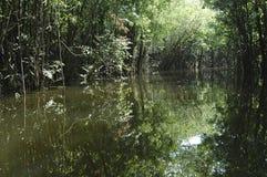 L'eau et arbres Image libre de droits