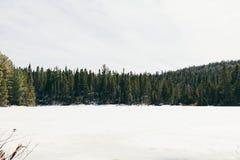 L'eau et arbres photographie stock libre de droits
