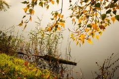 L'eau et branche d'identifiez-vous avec les feuilles jaunes lumineuses images libres de droits