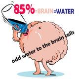 L'eau et cellules du cerveau illustration stock