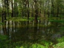 L'eau et forêt Photographie stock libre de droits
