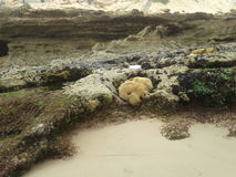 L'eau et herbe de roche image stock