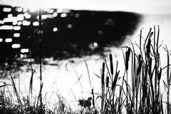 L'eau et jonc brillants Image stock