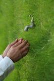 L'eau et la vie Photos libres de droits