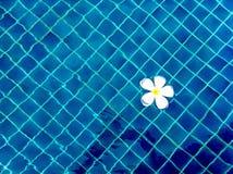 L'eau et parapluies Photographie stock libre de droits