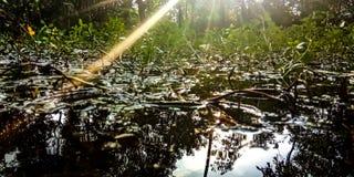 L'eau et usines exposées à la lumière du soleil dans la forêt photos stock