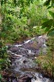 L'eau fonctionnant parmi les pierres noires dans la végétation intense image libre de droits