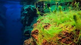 L'eau glaciaire clair comme de l'eau de roche bleue en parc national Islande de Silfra Thingvellir images stock