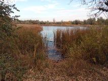 L'eau, lac, roseau, automne, jaune, matin, pêche, feuillage, fond, repos, contemplation image libre de droits