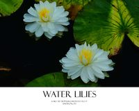 L'eau Lillies Photos stock