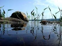 L'eau Lillies au niveau d'eau Images libres de droits