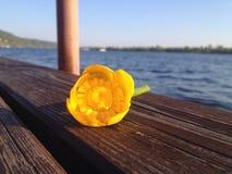 L'eau lilly images libres de droits