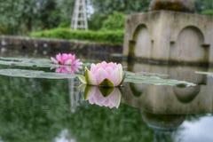 L'eau Lilly& x27 ; réflexion de s Image libre de droits